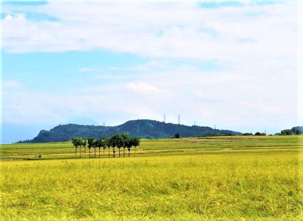 池ケ原の田園風景